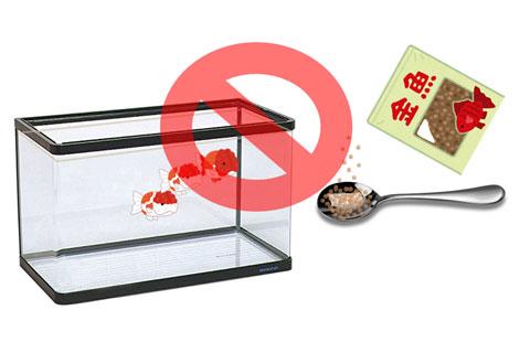 金魚へのえさやり禁止