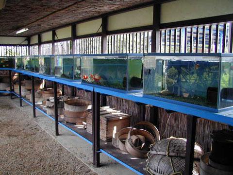 郡山金魚史料館